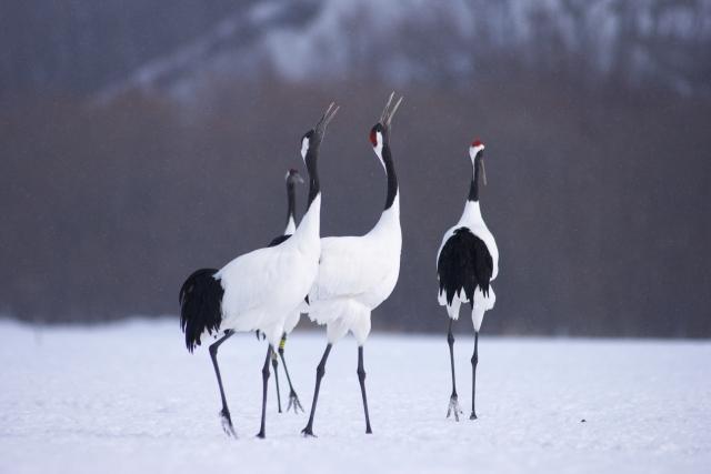 北海道旅行のおすすめ!釧路湿原のカヌーでタンチョウ観察。ワシやシカに会えました。
