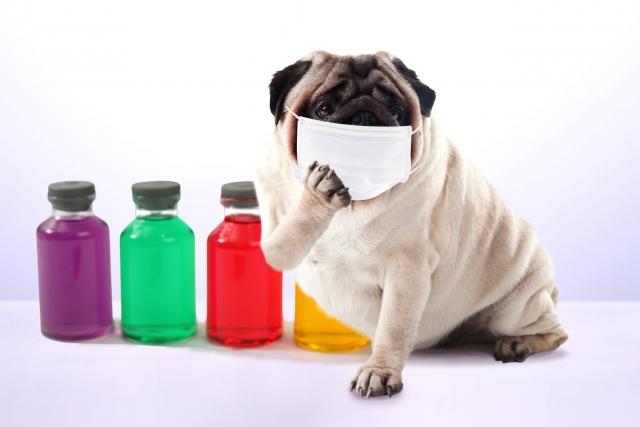 【感染する腫瘍】癌はうつるの?動物の世界で知られる3つの例~タスマニアデビル・イヌ・貝