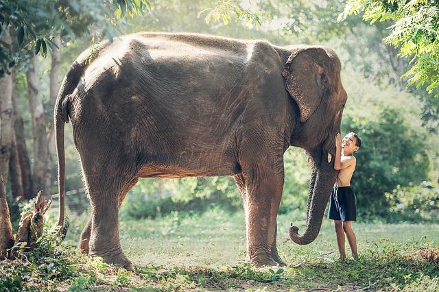 【ゾウの雑学】知らなかった!ゾウの体の不思議~遺伝子、歯、耳の雑学。