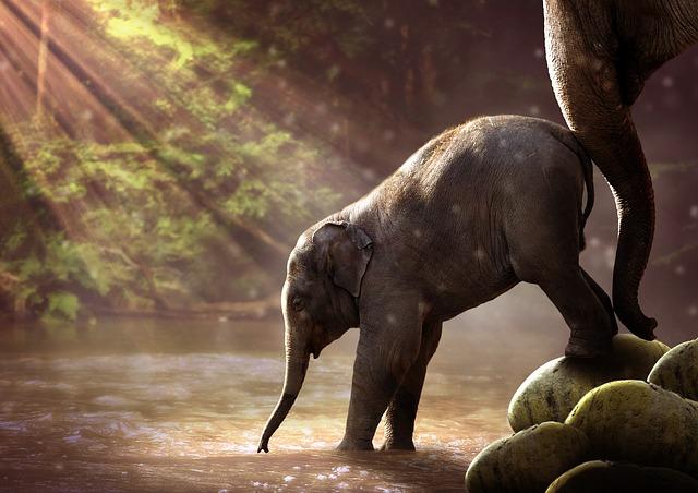 【ゾウの病気】人に感染するものも。ゾウで問題となる感染症まとめ。