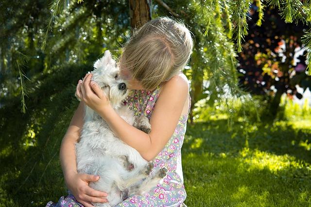 【犬のがん治療】オプジーボとは?PD-1, PD-L1抗体の犬への応用研究の現在