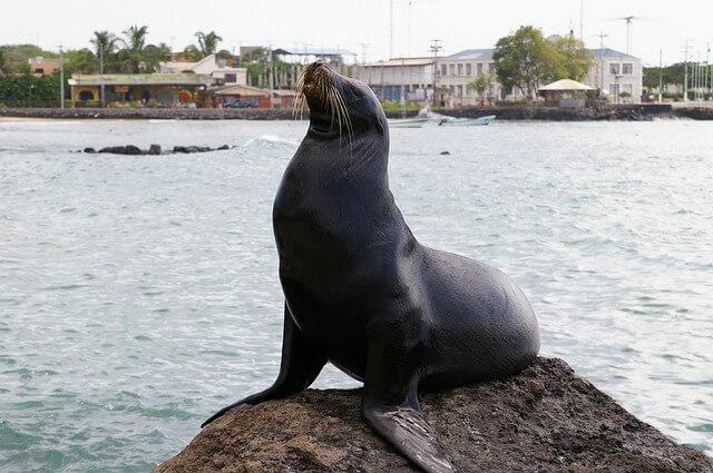 【リトルガラパゴス】ペルーはパラカス、バジェスタス島でアシカウォッチング!