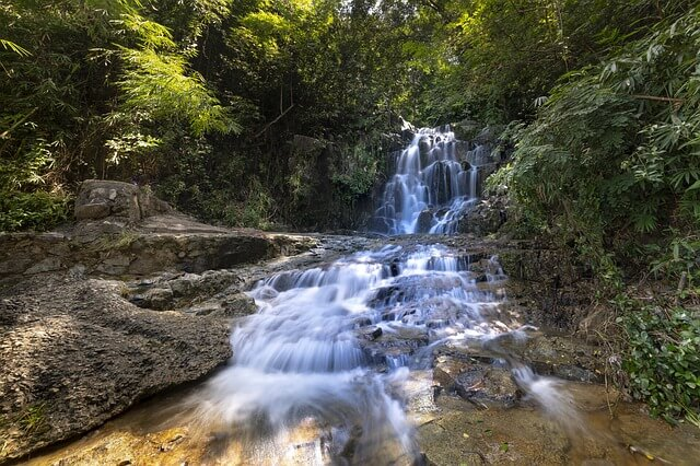 【まとめ】ベトナム旅行で動物が見たい方必見!クックフォン国立公園への行き方や費用、見られるもの