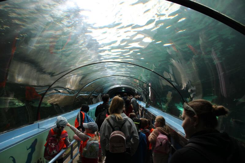 【世界に3ヶ所】SEA LIFE シドニー水族館で貴重なジュゴンを観察!